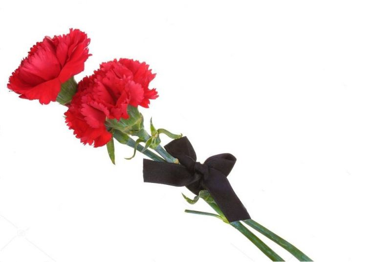 depositphotos 10229284-stock-photo-carnations-and-black-ribbon-isolated