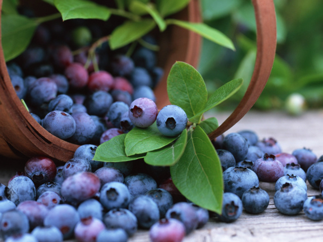 Food Berries and fruits and nuts Basket of blueberries 029705 29